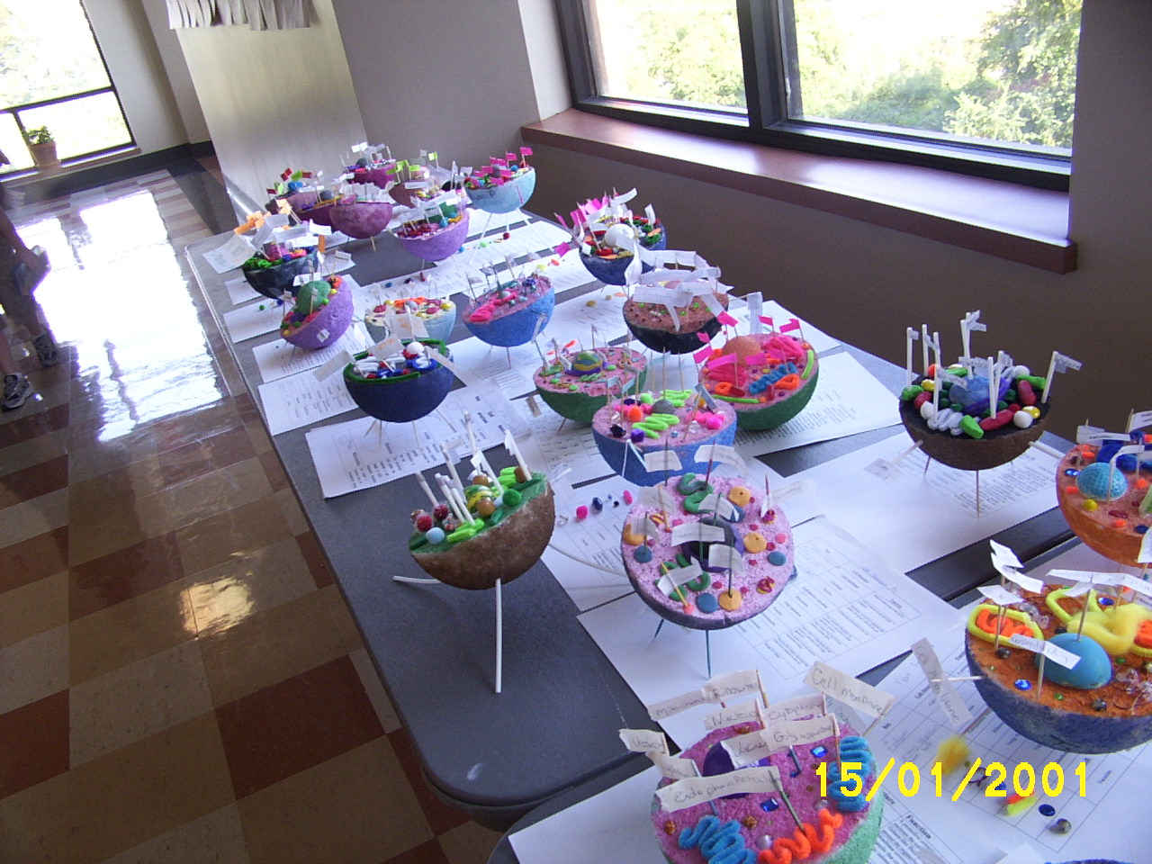 Sample of Plant Cell Projects http://stpvogelweid.edublogs.org/2010/11/04/the-7th-grade-science-project-on-plant-and-animal-cells/