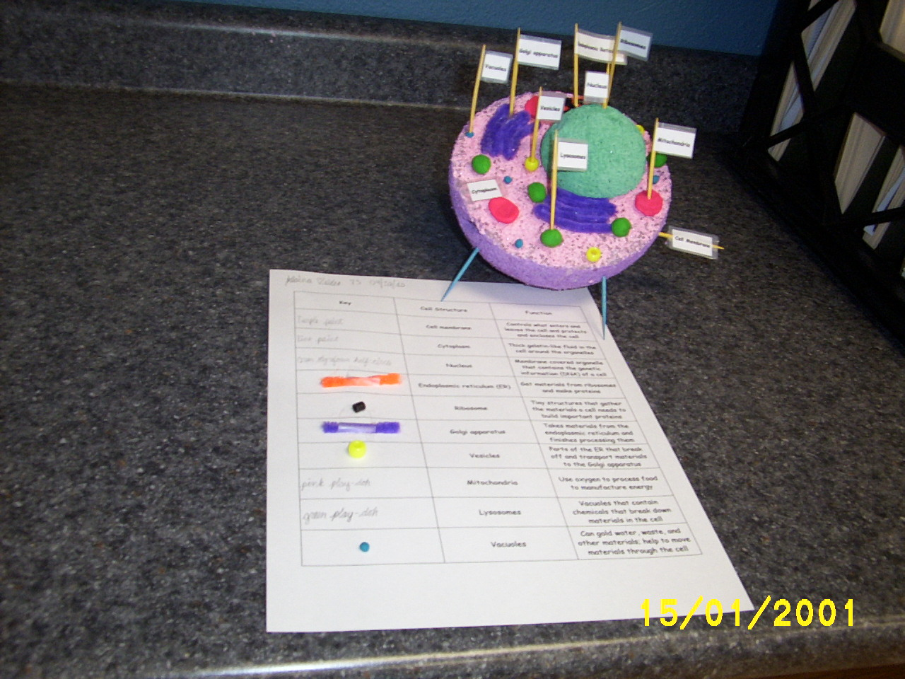 Animal Cell 3D Science Project http://stpvogelweid.edublogs.org/2010/11/04/the-7th-grade-science-project-on-plant-and-animal-cells/